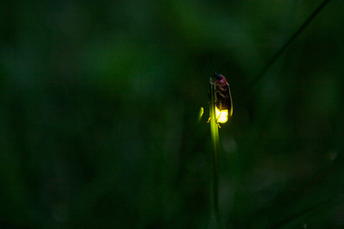 Nature's Nightlights