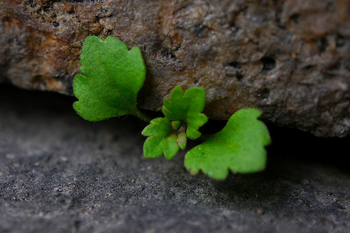 Thriving in a Rock Crevice