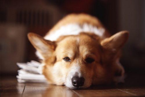 News Paper Dog