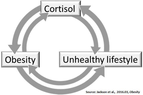 Obesity, Cortisol, and Lifestyle