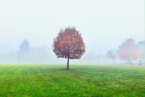 Colours Filtered Through the Mist