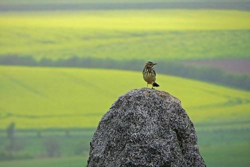 High Sparrow