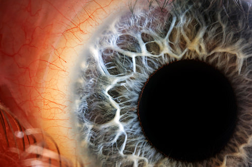 Blue Iris, Human Eye