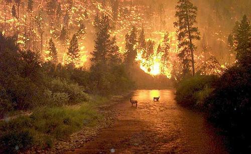 Bitterroot Forest Fire