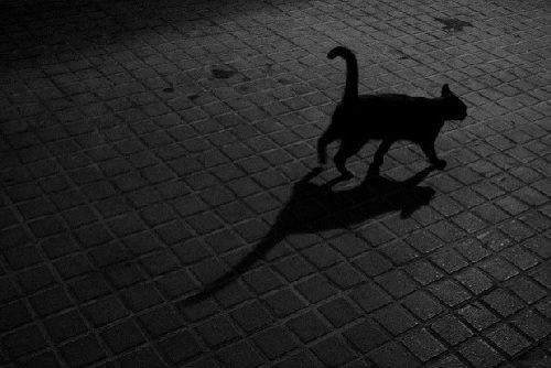 Gats (cats)