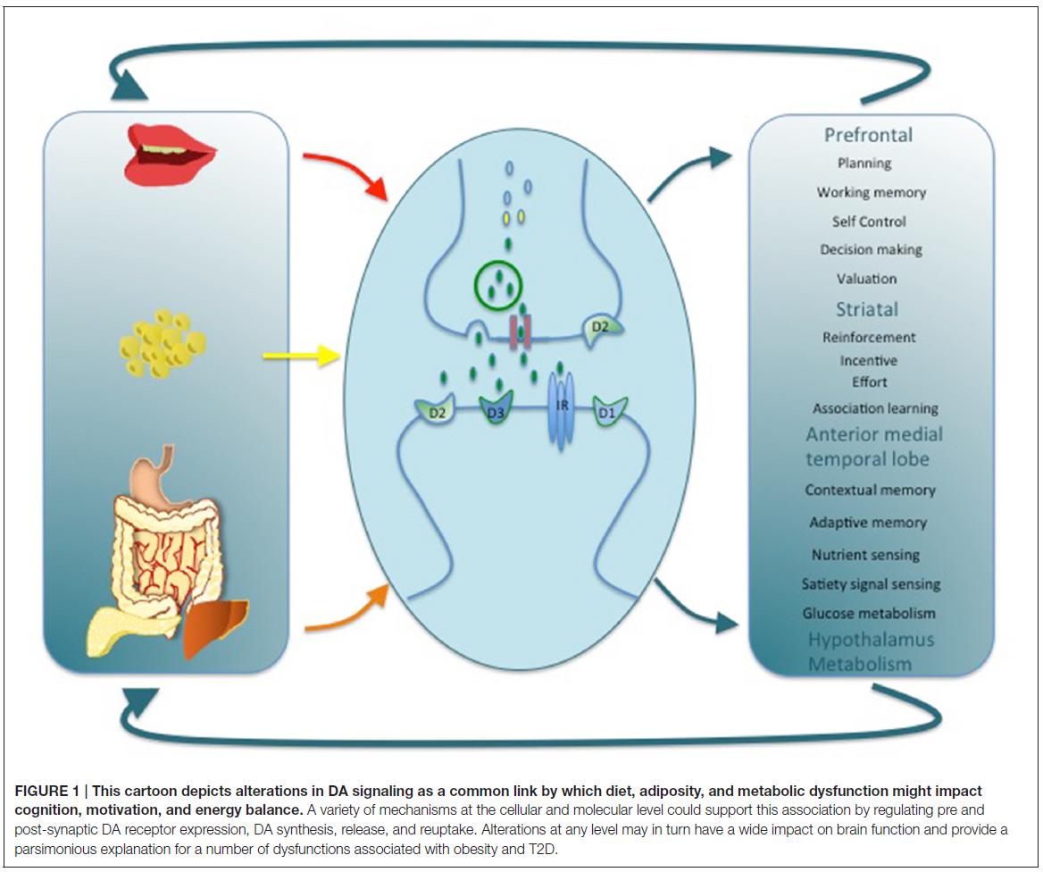 Dopamine Signaling