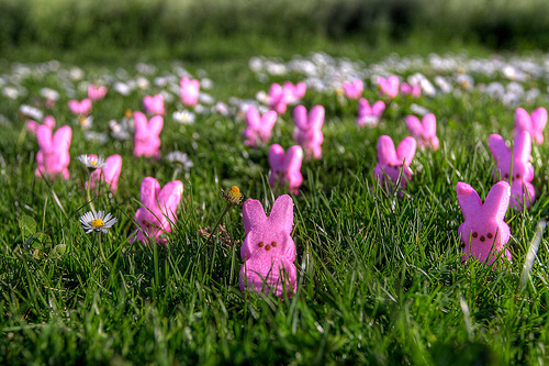 Invasion of Easter Peeps