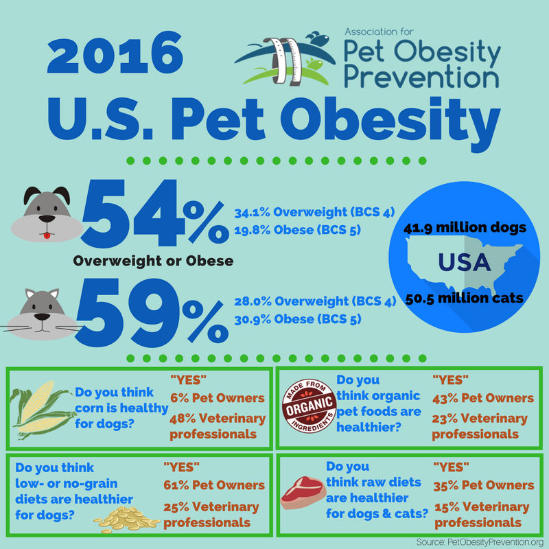 2016 Pet Obesity Infographic
