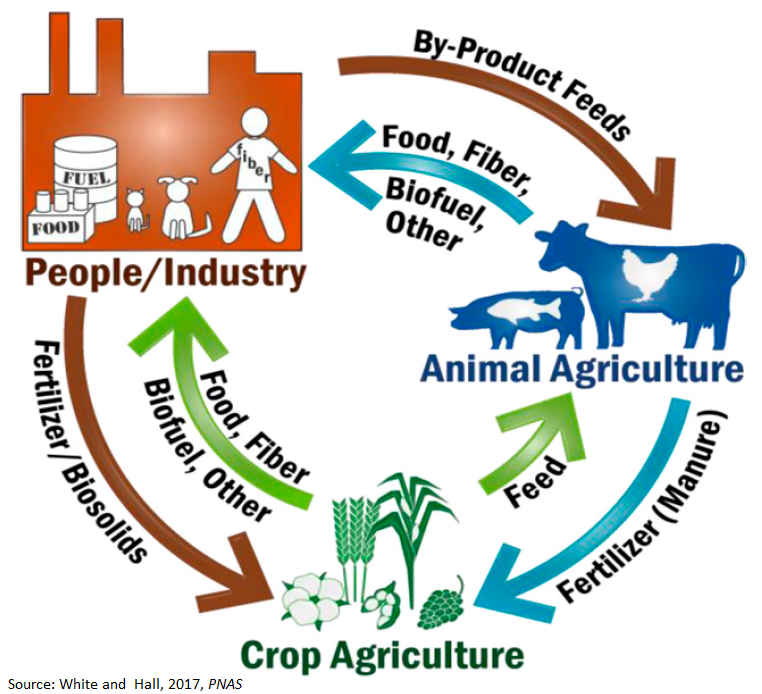 Agricultural Systems Model