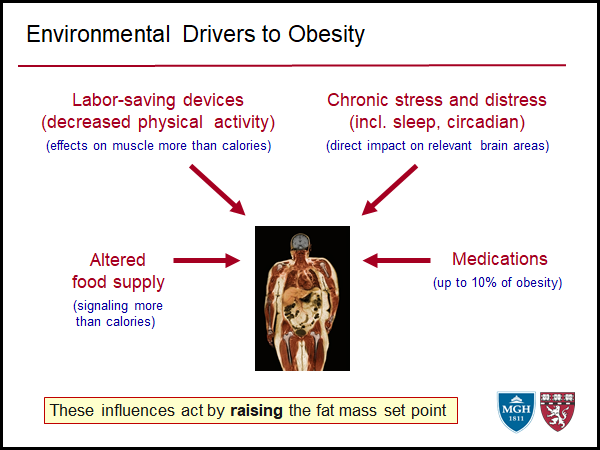 Environmental Drivers to Obesity