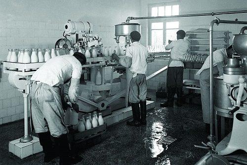Pasteurized Milk Factory