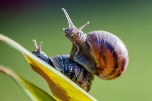 Snail Bandwagon