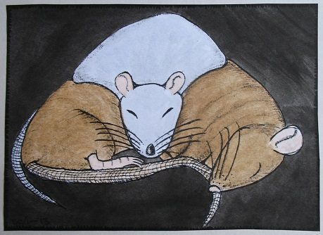 Cuddling Rats