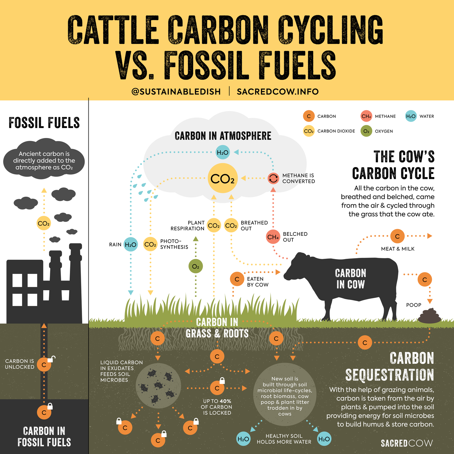 Cattle Carbon Infographic