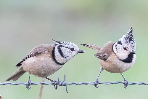 Birds' Argument
